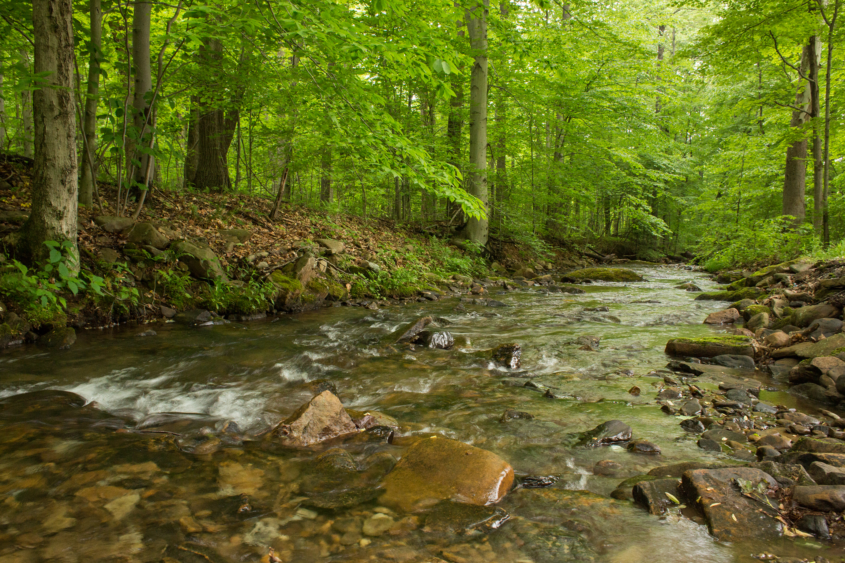 The nature reserve gets its name from Powdermill Run, a stream that is among the highest quality in the state. Photo by Pamela Curtin, PNR
