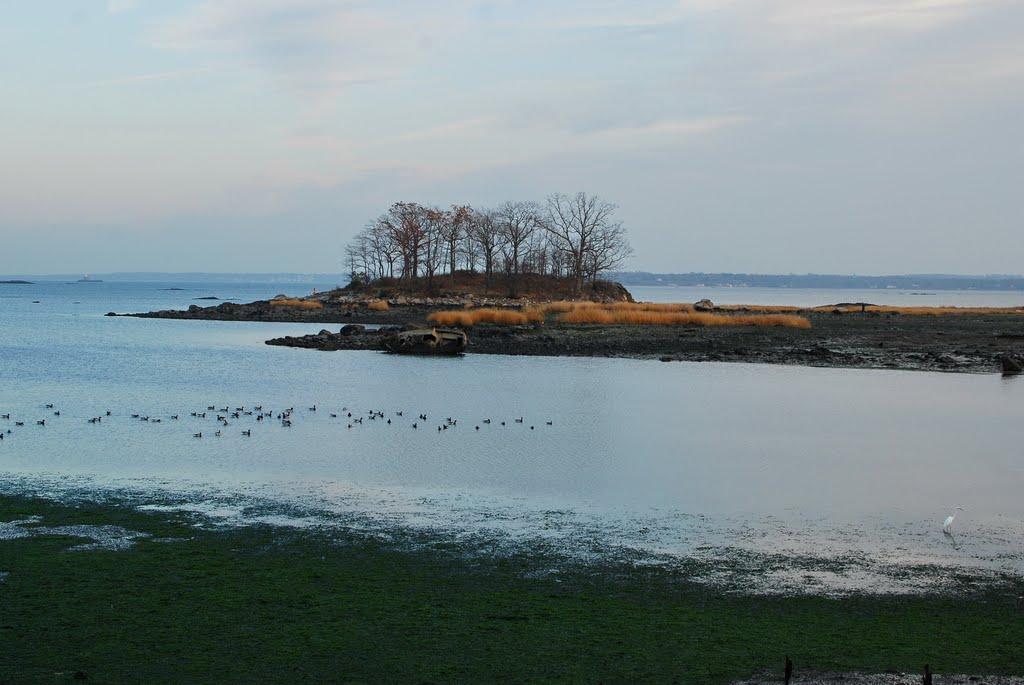 Island Environment