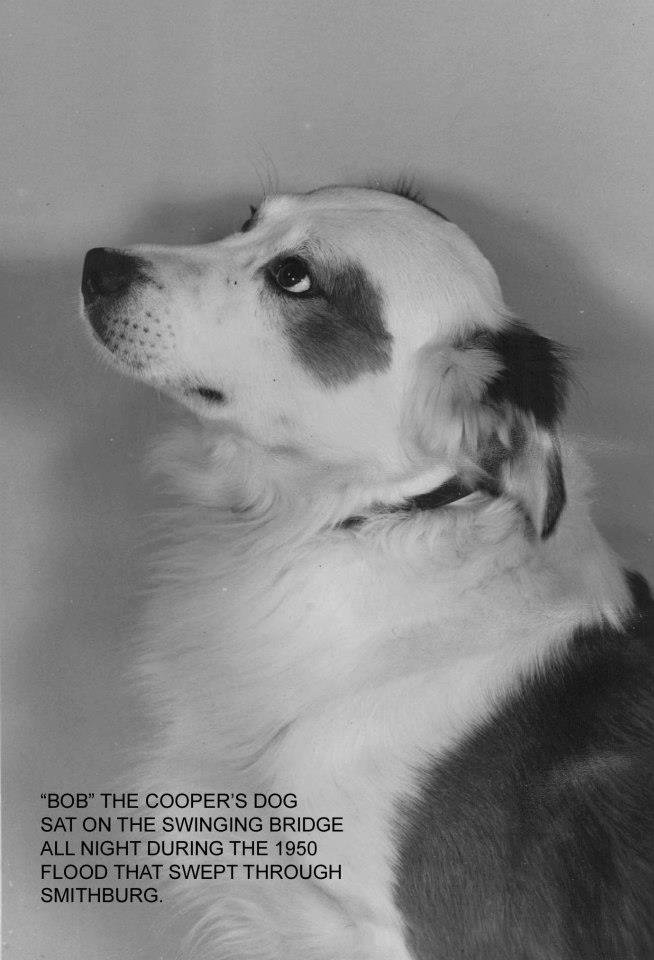 Bob the dog rode his family's house down Middle Island Creek with his owners until it hit a bridge. The family, but the father Phil, drowned. He assumed Bob also perished. After the flood, Bob was reunited with Mr. Cooper. Bob lived a long life.