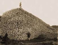 Bison Skulls to be used for fertilizer, fine bone china, and the refining of sugar, c. 1870