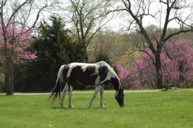 One of the main attractions of the farm is now the ability to house and breed horses. Horses on the farm are also used for group training events.