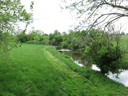 Panther Skin Creek