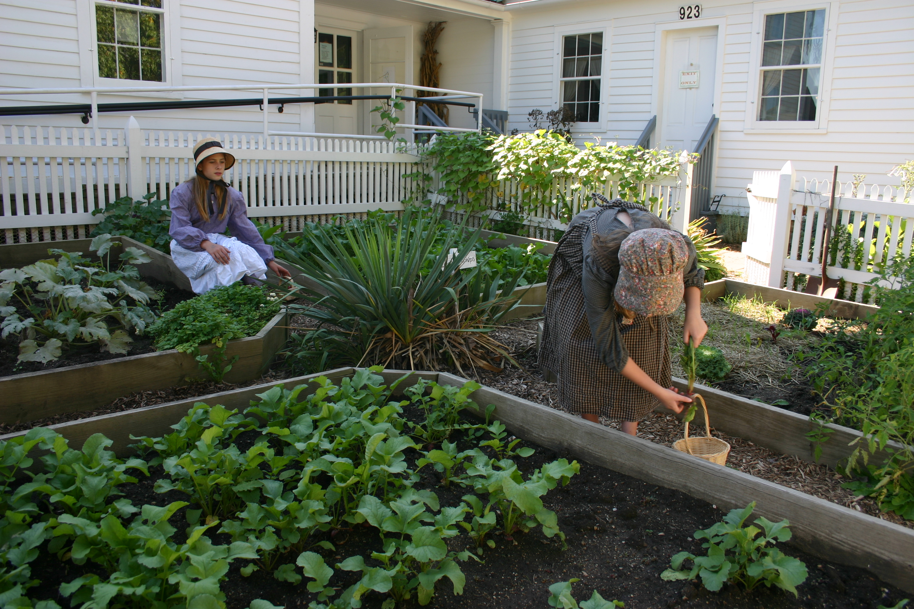 Volunteers tend and harvest the garden