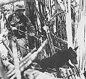 Each war dog had a specific role:  scout dogs went ahead of their handlers to detect mines or enemy troops; messenger dogs carried correspondence or supplies; and infantry dogs alerted troops of the enemy.