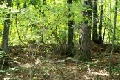 Buckhead Creek Battlefield.