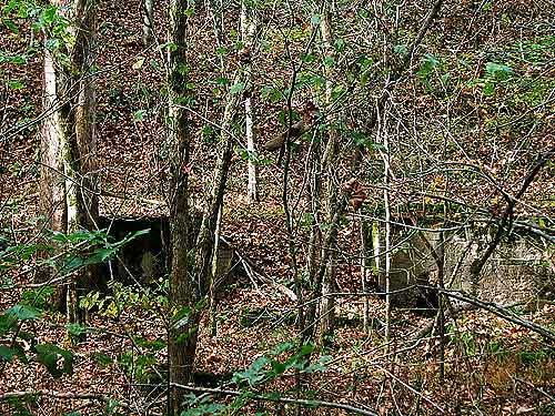 The remains of the gas plant that came to Stringtown, WV in 1920. It is overgrown with vegetation and is on private property. (Photo credit: Suzanne McMinn/chickensintheroad.com)