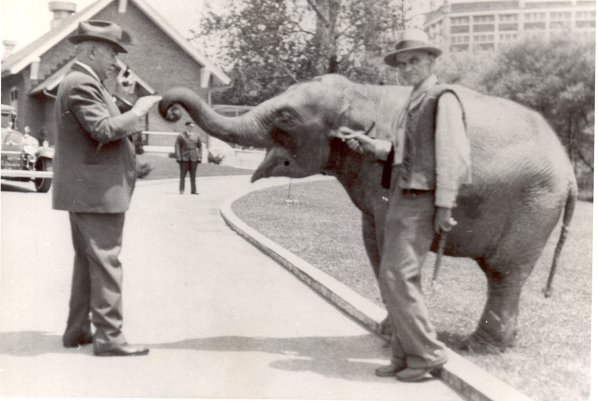 Milton Hershey feeding an elephant at the Hersheypark Zoo