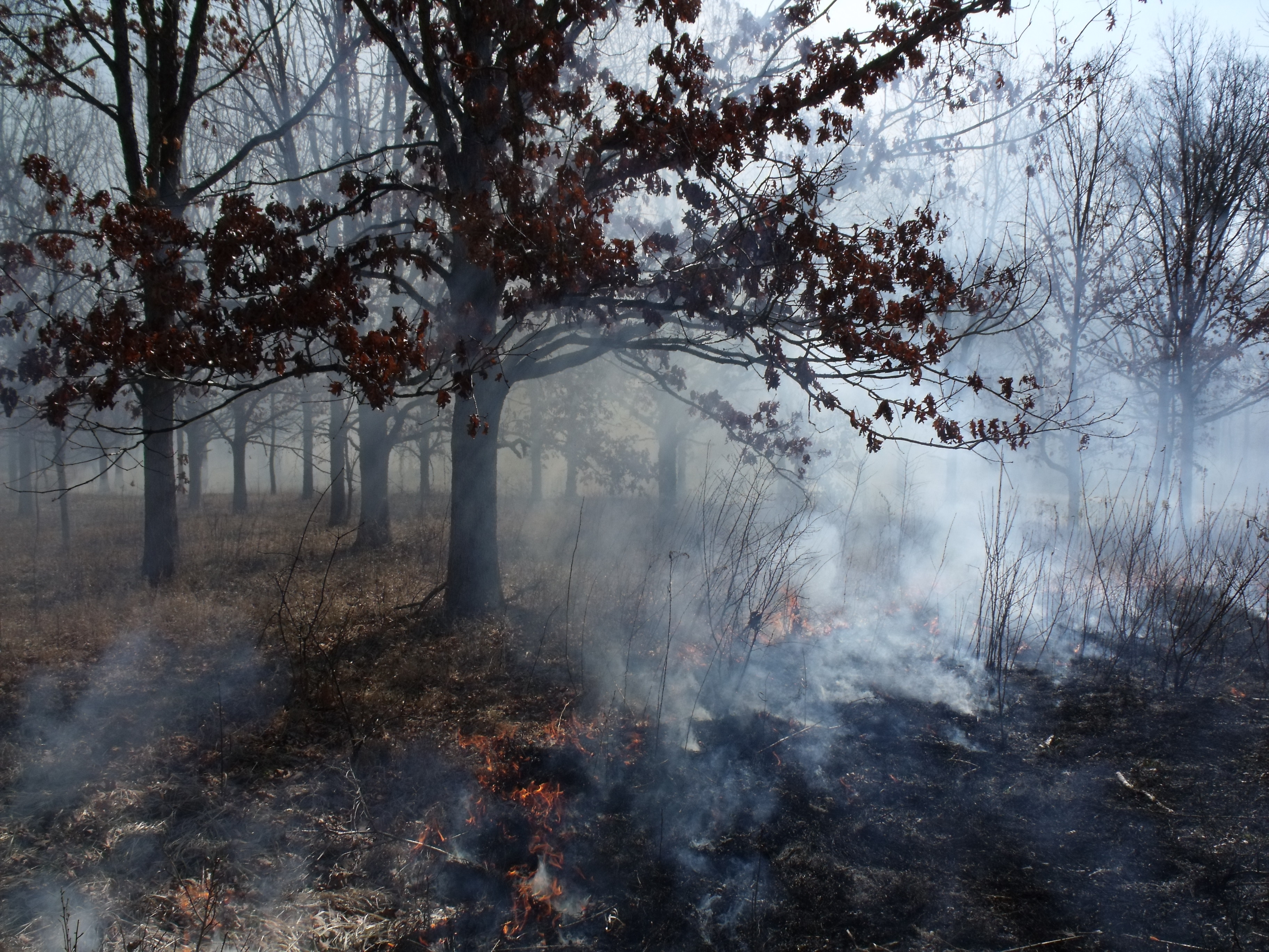 Prescribed Burn at Rayburn-Purnell Woods