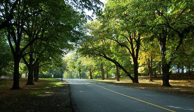 Campus driveway