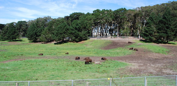 Bison Paddock in Golden Gate Park, San Francisco