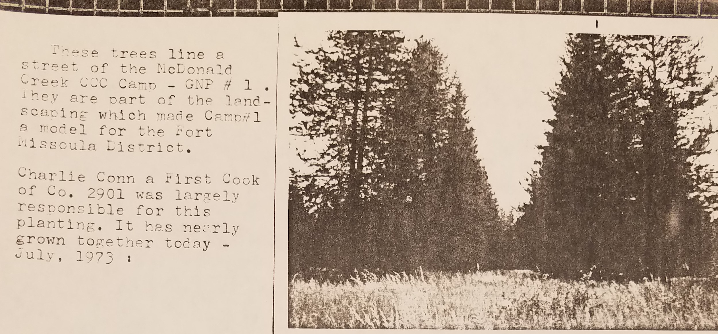 Troops dispatched from Fort Missoula had a close relationship with the Forest Service. The CCC was instrumental in maintaining the health of  Montana's forests.(Photo Undated)