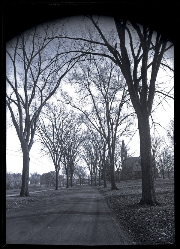 Elm allee on Olmstead Road, looking south toward Old Chapel, photograph, ca. 1920.