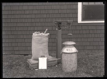 Extension School dairy equipment: feed, scales, milk can, and record, ca. 1920.