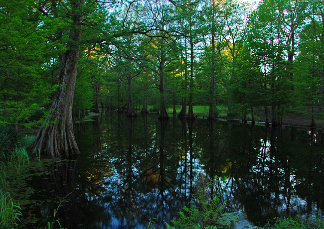 Greenville Cypress Preserve