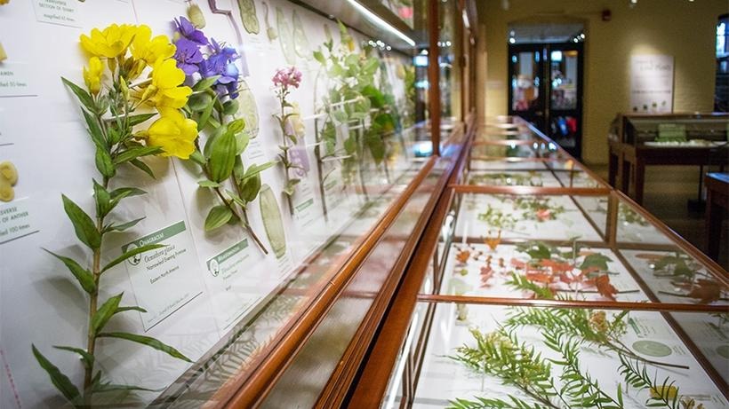 Exhibition Glass Flowers: The Ware Collection of Blaschka Glass Models of Plants. Credit: Harvard Museum of Natural History