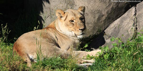 The zoo features lions, giraffes, birds, and many other animals. It is one of the city's top attractions.