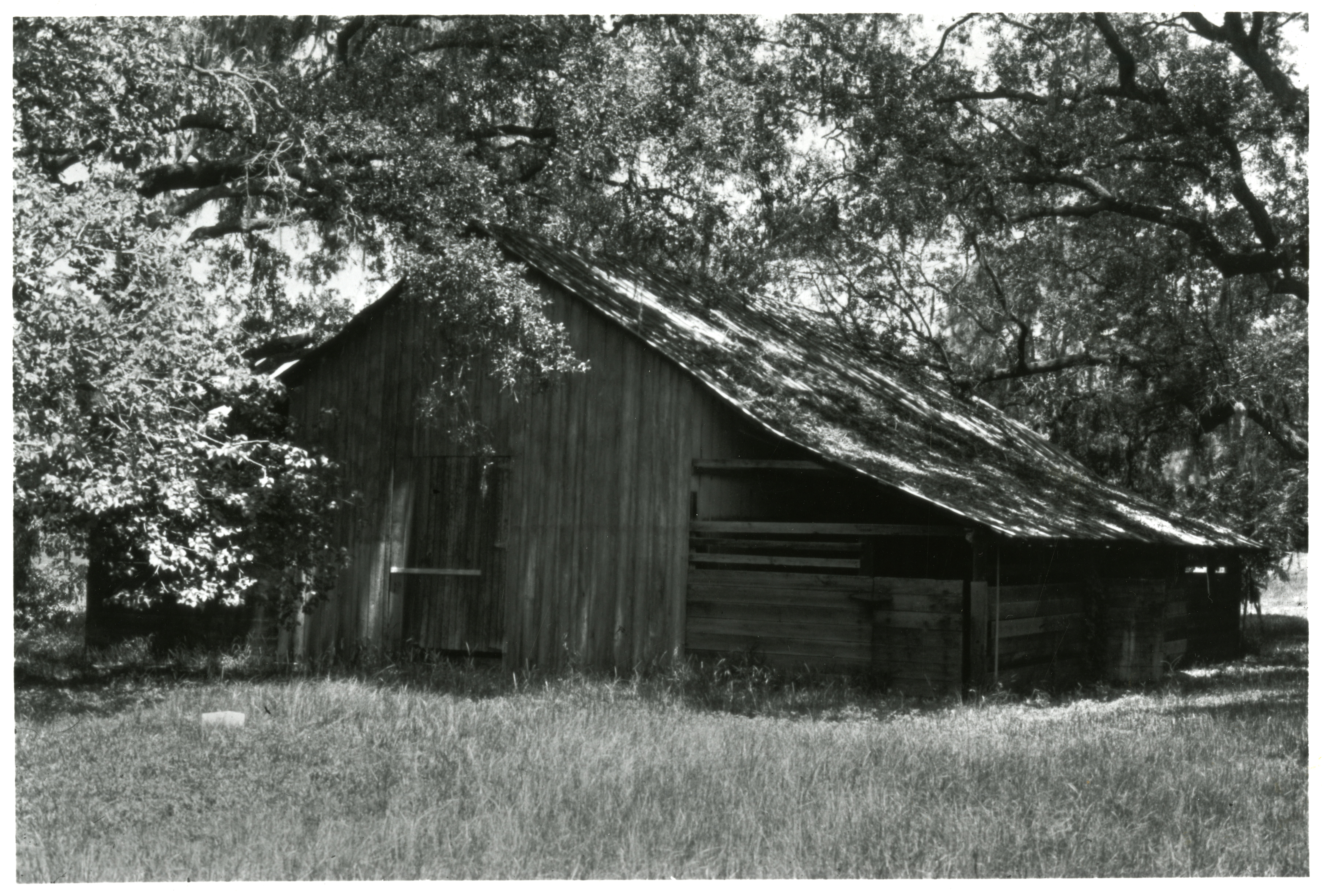 Lowe Barn before the move to Heritage Village, Largo, Florida, circa 1970.