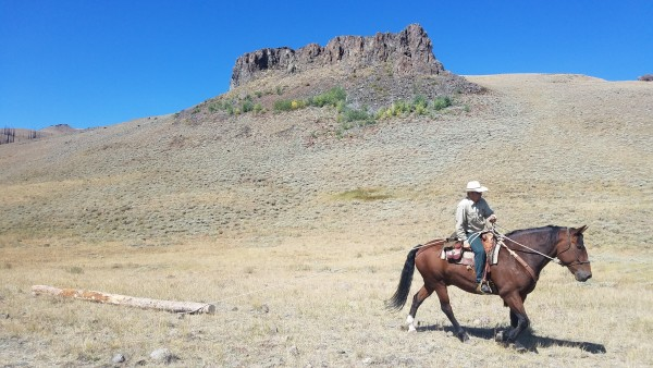 Horses help with heavy lifting during HistoriCorps preservation project