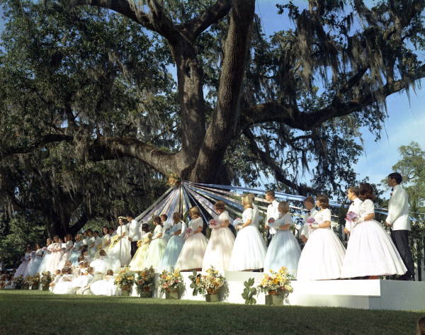 Scene from the 1967 Tallahassee May Party under the historic May Oak in Lewis Park.