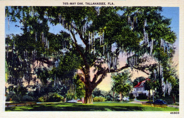 May Oak, Tallahassee, FL