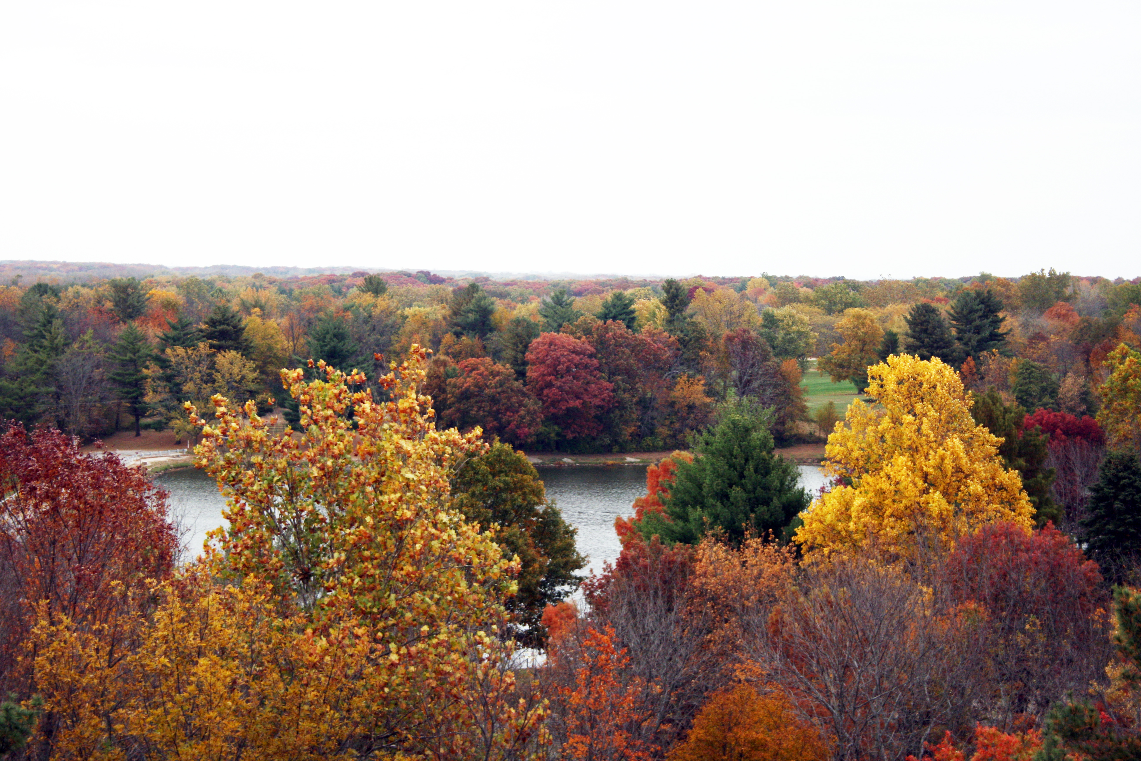 Fall View of Lake of the Woods Forest Preserve from the Top of HI Tower