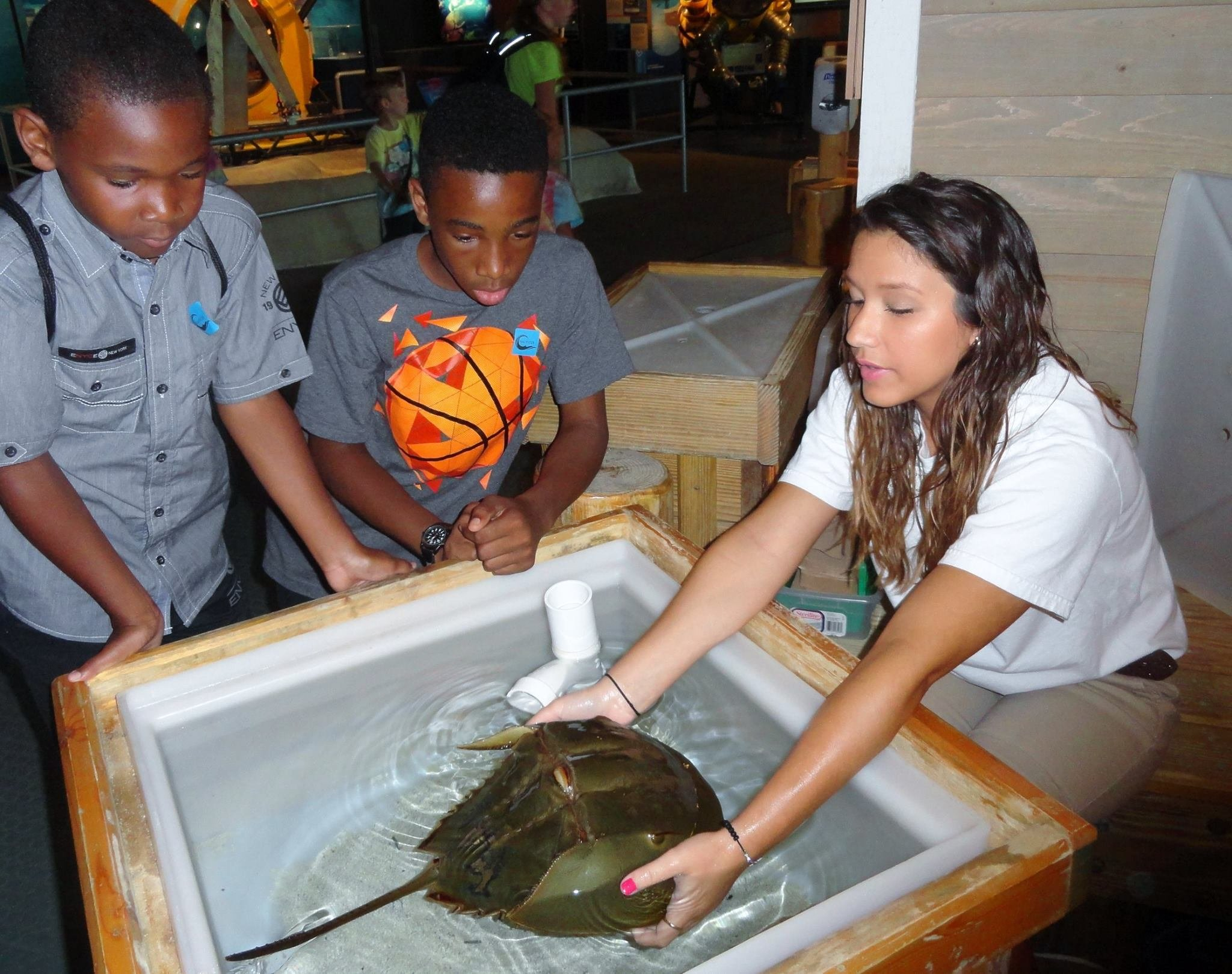 Visitors can touch a Horseshoe Crab at one of the Nauticus experiences.  Official Nauticus photo.