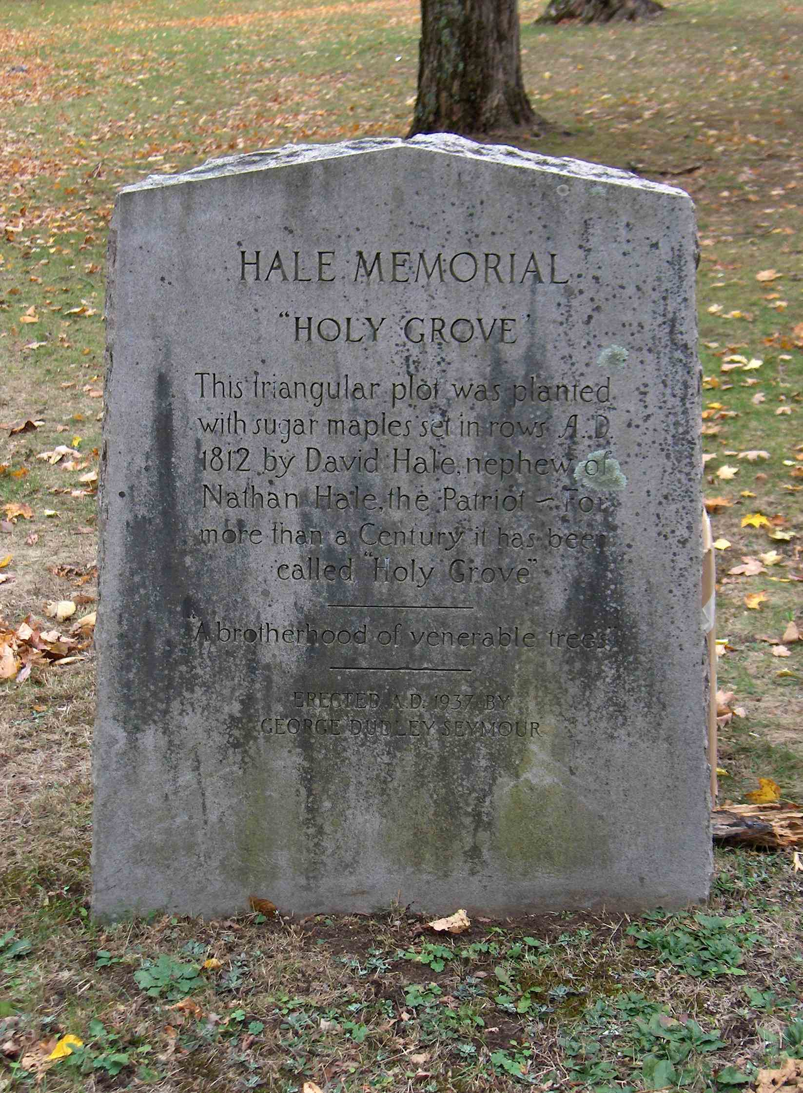 """A marker commemorating the """"Holy Grove"""" of sugar maples planted in 1812 by David Hale, nephew to Nathan."""