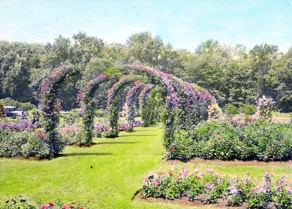A more recent view of the rose arbor.