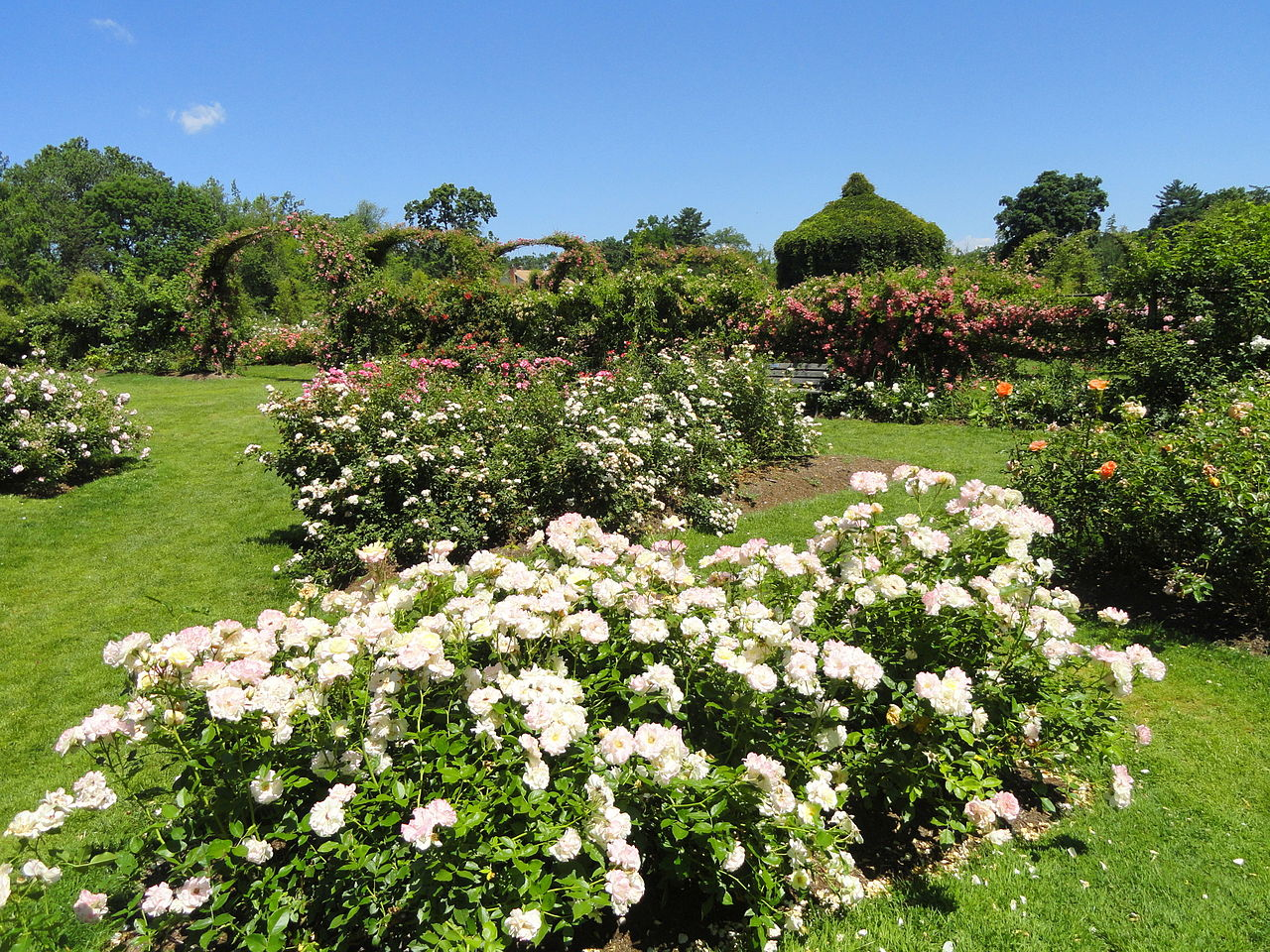 Rose garden with gazebo in background.
