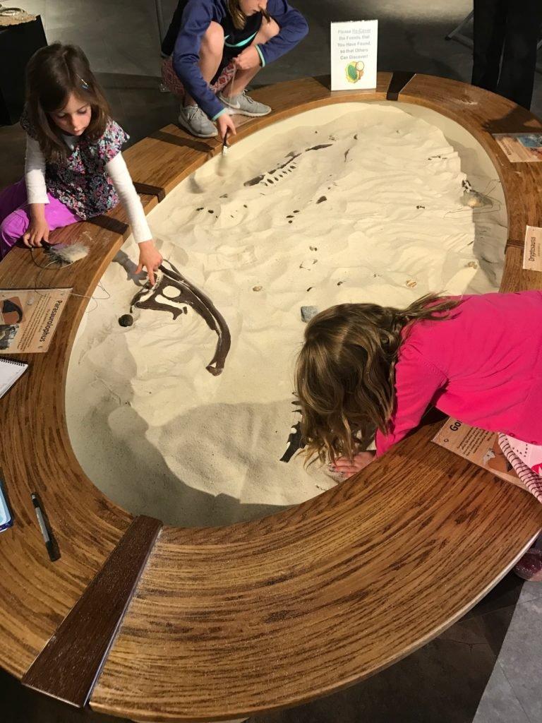 Paleontology Exhibit