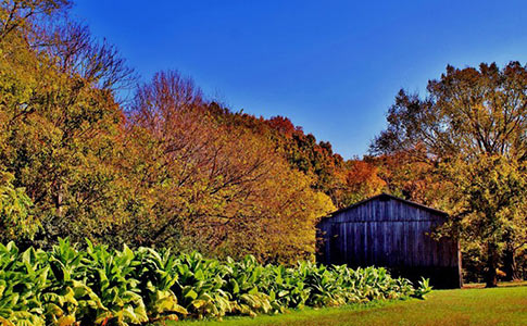 Fall view of the Tobacco Farm. Photo courtesy of NatchezTraceTravel.com