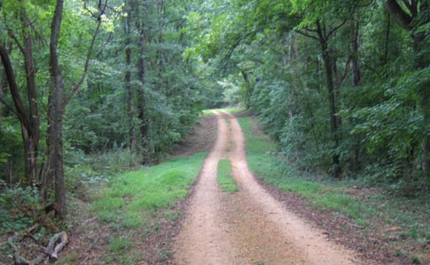 Part of the Old Trace - Old Trace Drive. Photo courtesy of NatchezTraceTravel.com