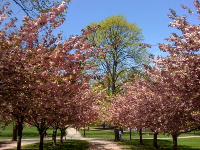 The park in spring.