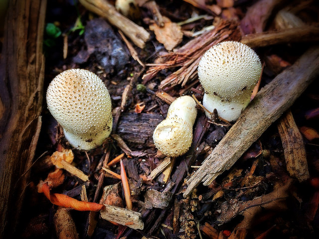 An example of mushrooms at Timberland Park. Photo courtesy of Lindsay Ferrier, Suburban Turmoil.