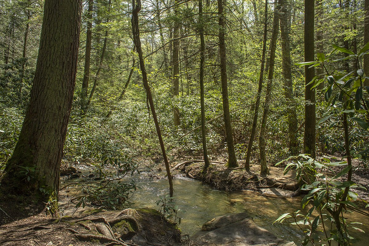 The Botanic Garden preserves natural landscapes like this forest and stream. Photo by Pamela Curtin.