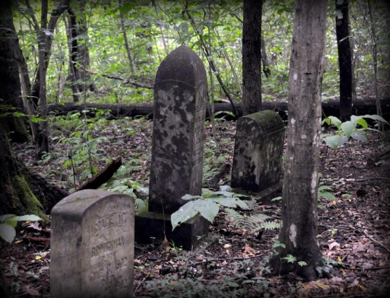 Plant, Wood, Tree, Headstone
