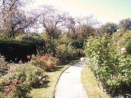 This is a view of the Kelleher Rose Garden, which occasionally hosts events such as weddings and public music performances. Image courtesy of Wikimedia Commons https://commons.wikimedia.org/wiki/File:KelleherRoseGarden.jpg.
