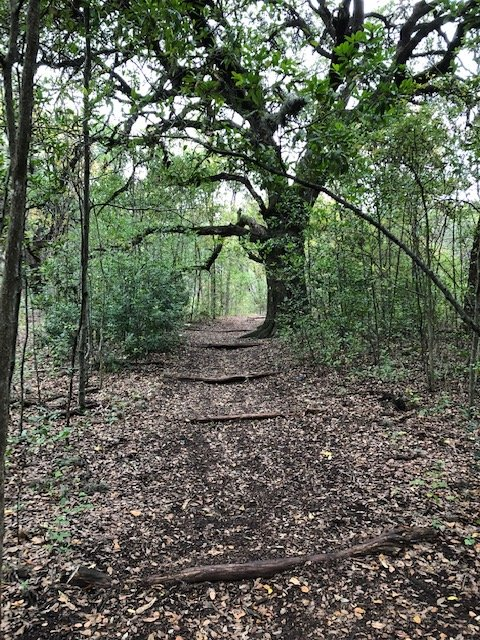 Trail at Blunn Creek Preserve (2018)