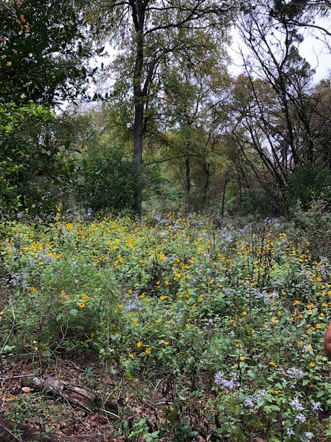 Flower bed at Blunn Creek Preserve (2018)