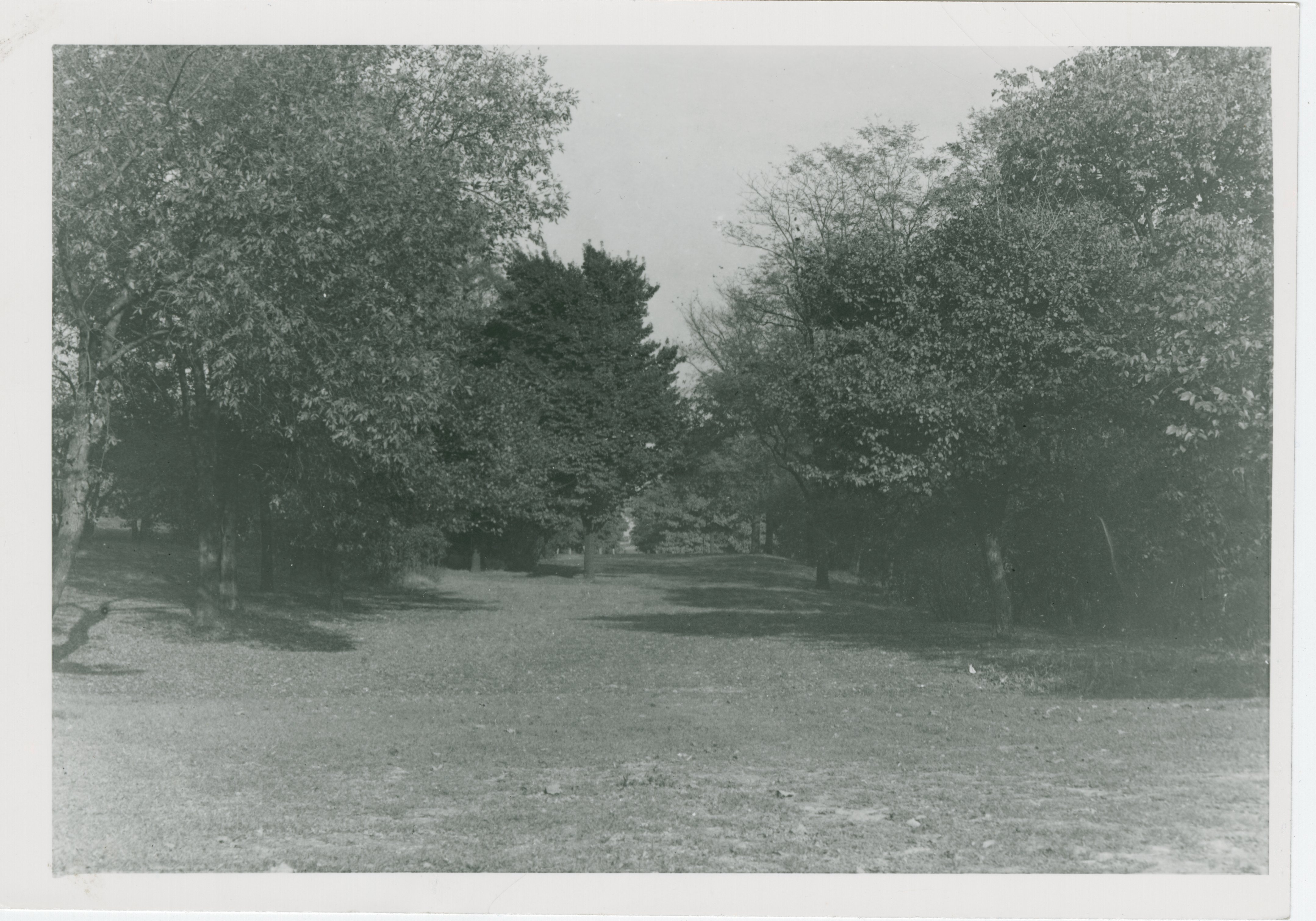 Woodland Trail Mt. Echo Park Vista 1930s 