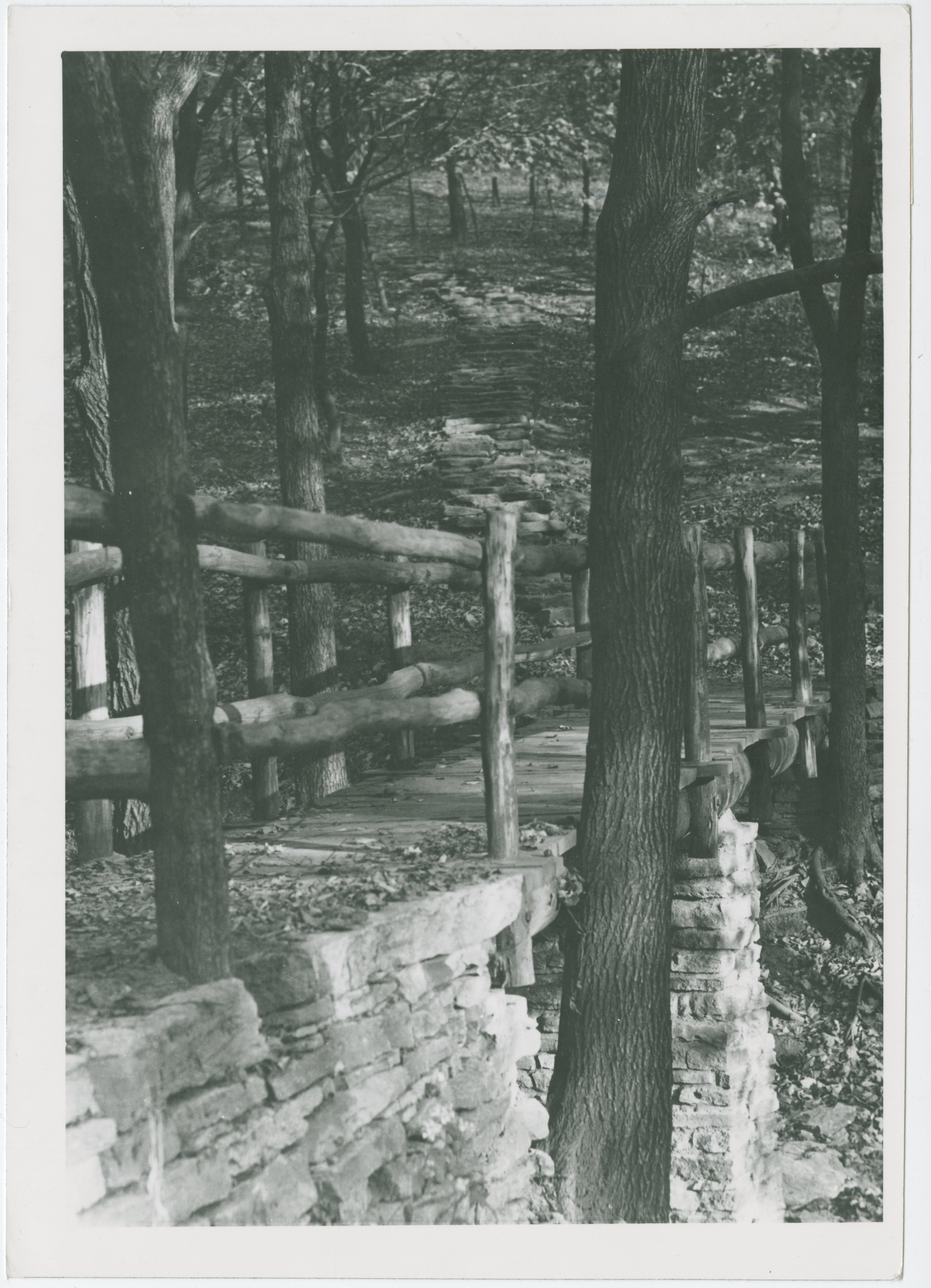 Woodland Trail in Mt. Echo Park, 1930s
