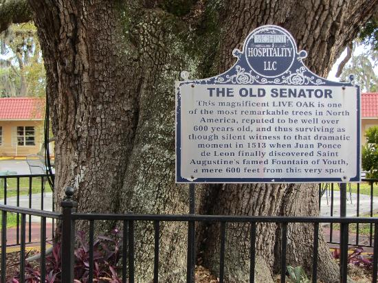 Historical marker at the base of the tree.