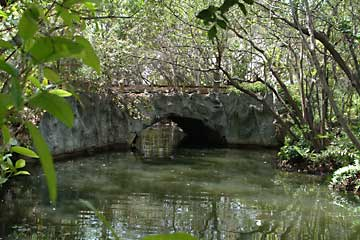 Until 1973, when it collapsed, the forty foot natural bridge of oolitic limestone that spanned Arch Creek was one of South Florida's earliest landmarks.