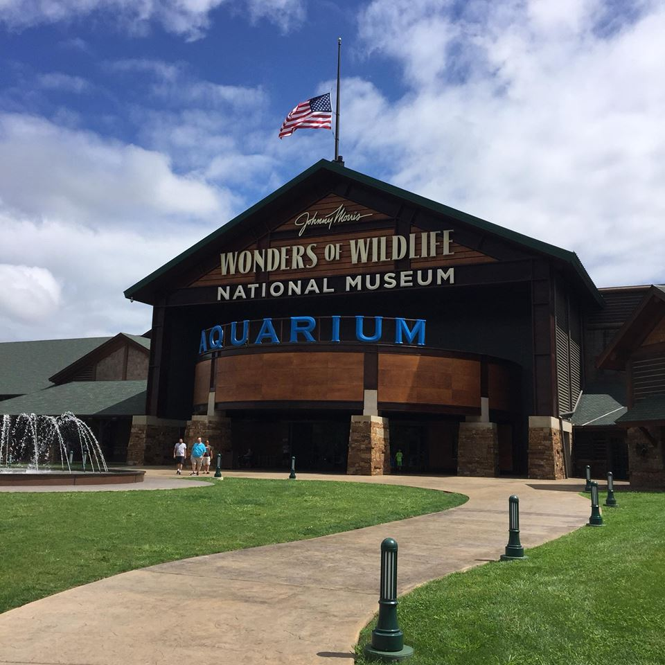 The Wonders of Wildlife Museum & Aquarium opened in 2017 and offers visitors a world-class museum experience typically found in larger cities. It is dedicated to conservation and wildlife.