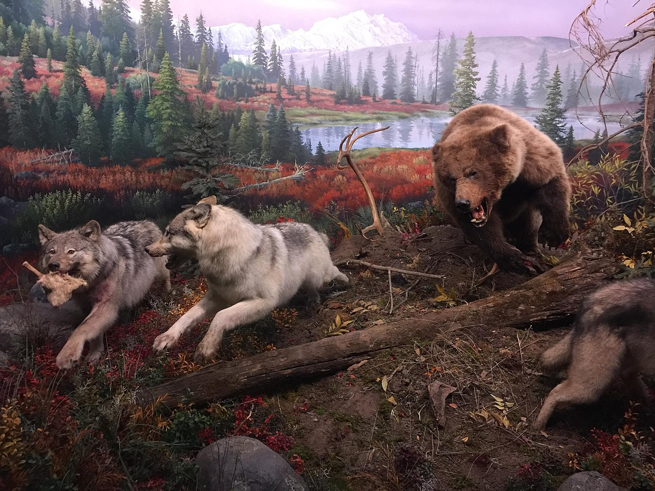 There are several immersive exhibits showing wildlife in their natural habitats.