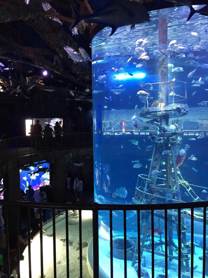 The aquarium holds over 35,000 aquatic animals.