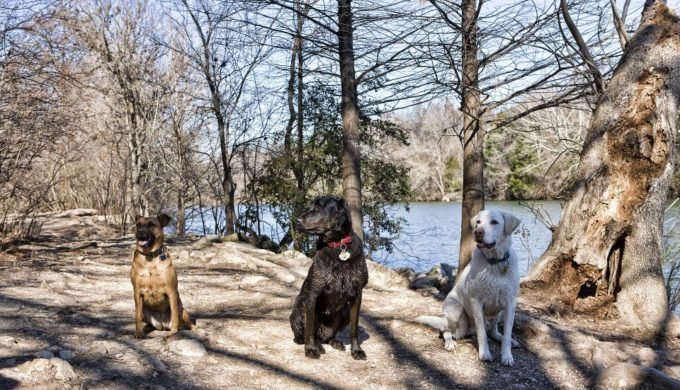 As a popular site for off-leash dog park, visitors can find themselves encountering numerous breed of dogs.