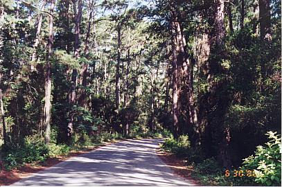 The Park Road at Bastrop State Park