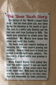 This sign is posted so visitors can read the Rose Tree's story and where it comes from.