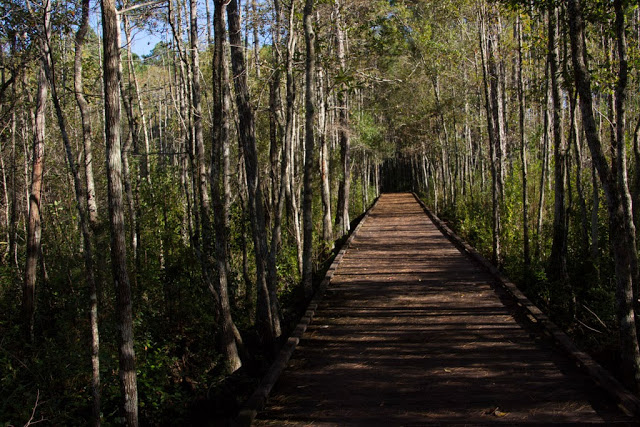 This is the walk way through the swamp as you tour around it.